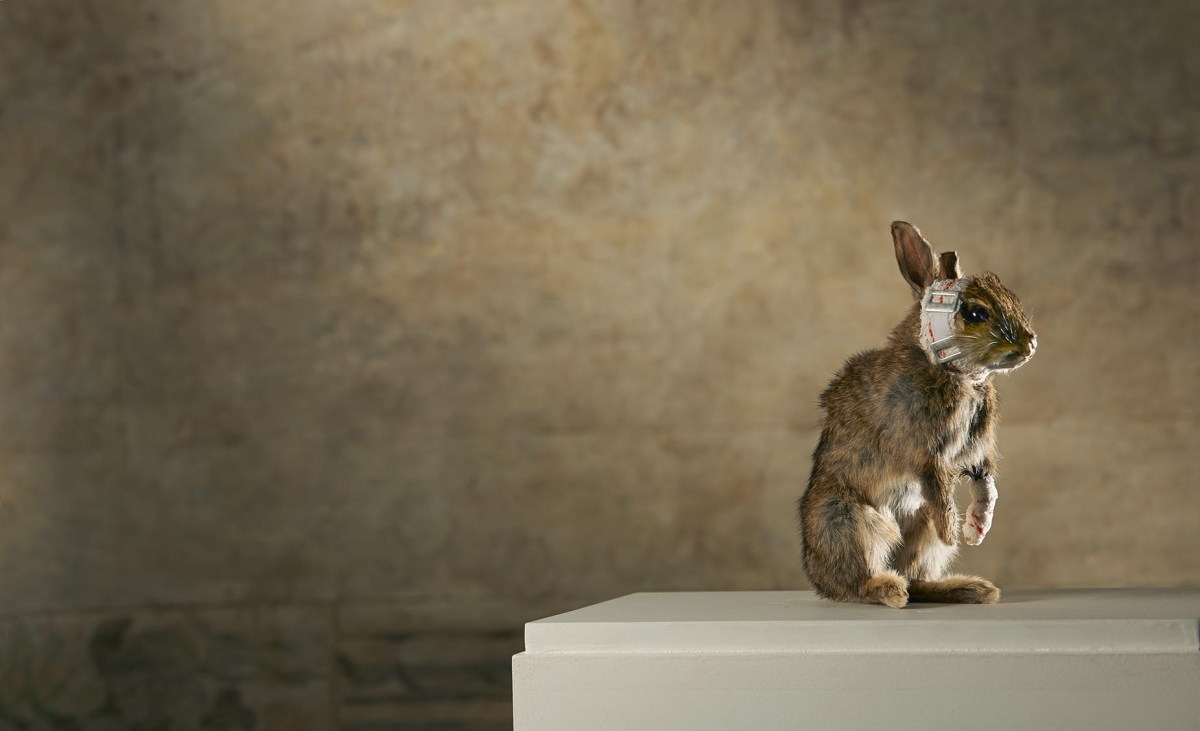 ANIMALS a different perception a cura di Patrizia Bottallo